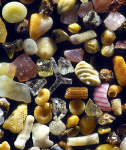 Sand grains from Maui, Hawaii Magnified 125x